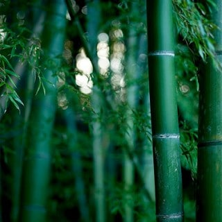 Pros and Cons of Bamboo Fabric