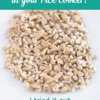 Can you make rice cooker steel cut oats? I tried it out, so you don't have to.