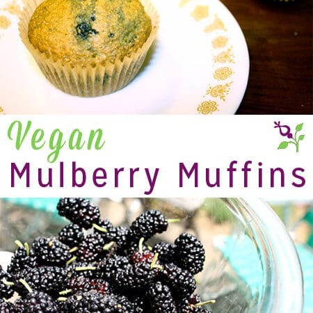 You can make this mulberry muffin recipe with blueberries or blackberries if you can't find mulberries where you are.