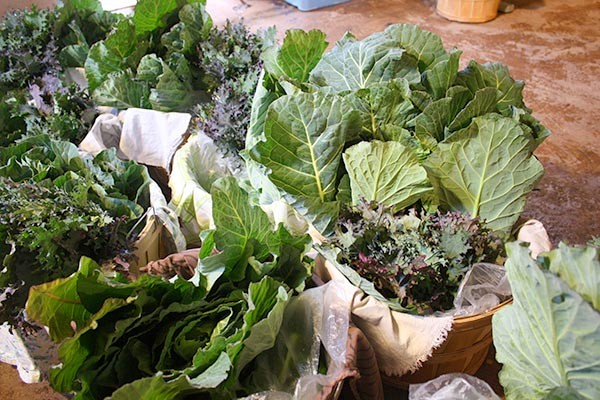 Look at those lovely greens! Those are collards in the back of each basket and curly kale up front.