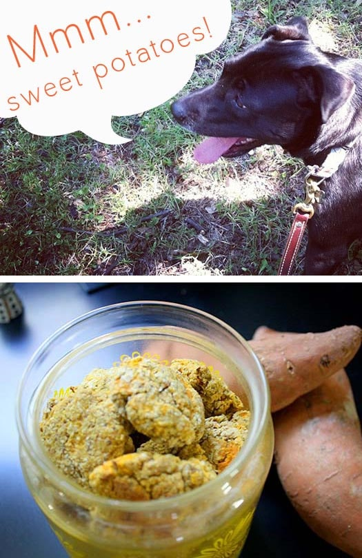 These sweet potato dog treats are loaded with healthy foods that dogs love!