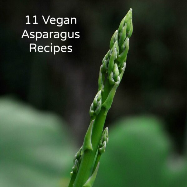 It's asparagus season! Check out these yummy vegan asparagus recipes to make the most of this springtime superstar.