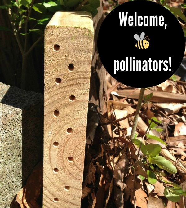 This pollinator habitat along with bee-friendly plants basically turns your backyard into a spot with free room and board for bees!