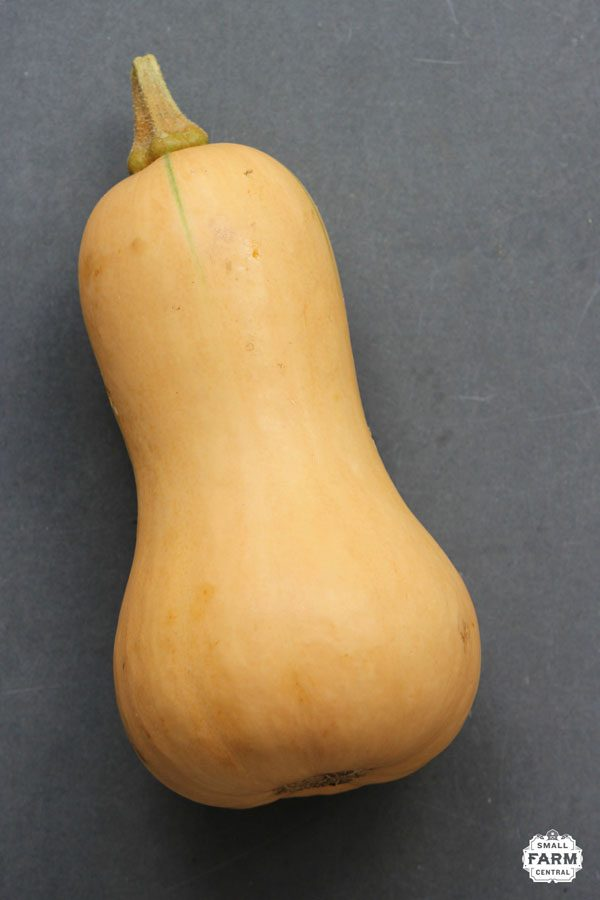 butternut squash on a gray background